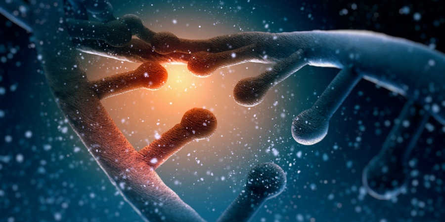 The Ultimate Guide To Conquering Your DNA In The Next 10Minutes