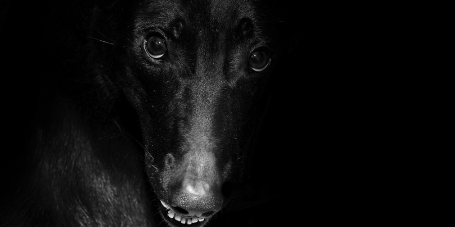 28 People Reveal The One Incredibly Creepy Thing Their Pets HaveDone