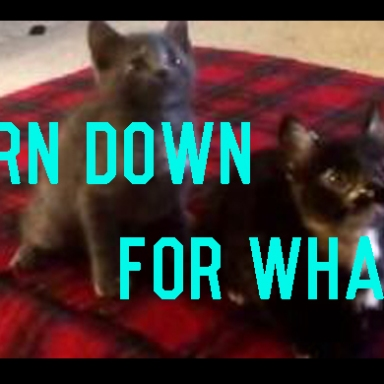 Are You Ready For The Kitten Version Of  Turn Down For What?