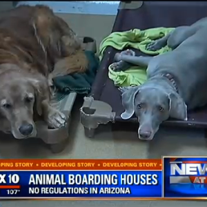Arizona Senator's Son Might Have Accidentally Cooked 20 Dogs To Death