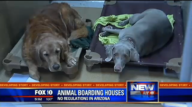 Arizona Senator's Son Might Have Accidentally Cooked 20 Dogs ToDeath