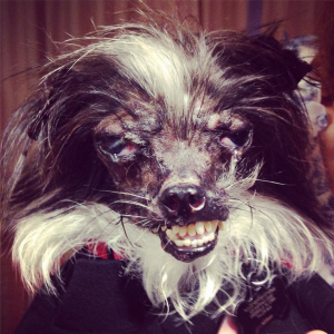It's Official! The World's Ugliest Doge Is From North Carolina!