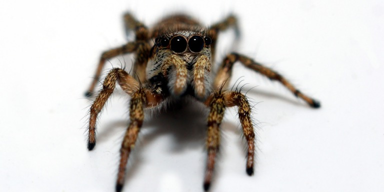 This Man Found A Spider In His House And Did Exactly What YouShouldn't