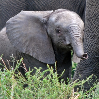 23 Gifs Of Baby Elephants That Will Brighten Your Day