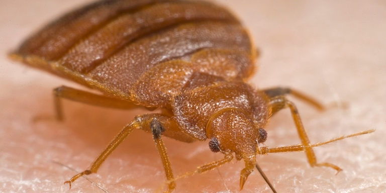 How To Protect Yourself From Bed Bugs This Summer