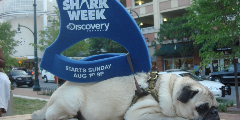 6 Alternative Weeks To Shark Week That Discovery Channel Can Start Showing