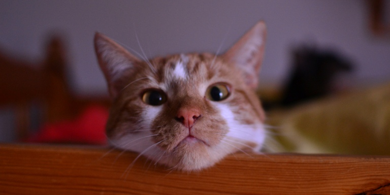 12 Questions All Humans Would Like Their Cats To Answer RightNow