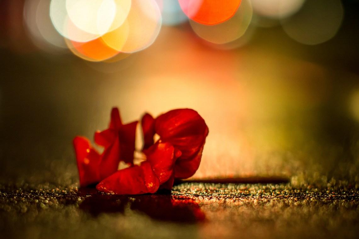 image - Flickr / Lotus Carroll