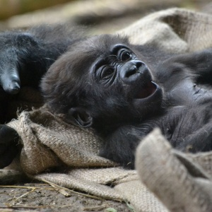 Introducing The 19 Most Ridiculously Loveable Baby Zoo Animals To Brighten Up Your Day