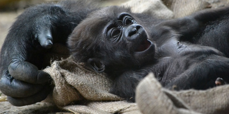 Introducing The 19 Most Ridiculously Loveable Baby Zoo Animals To Brighten Up YourDay