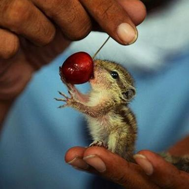 20 Of The Most Adorable Pictures Of Baby Squirrels You've Ever Seen In Your Life