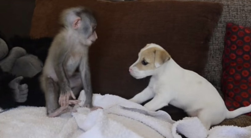 Adorable Video Of Baby Monkey And Puppy BFFs Will Melt Your Heart