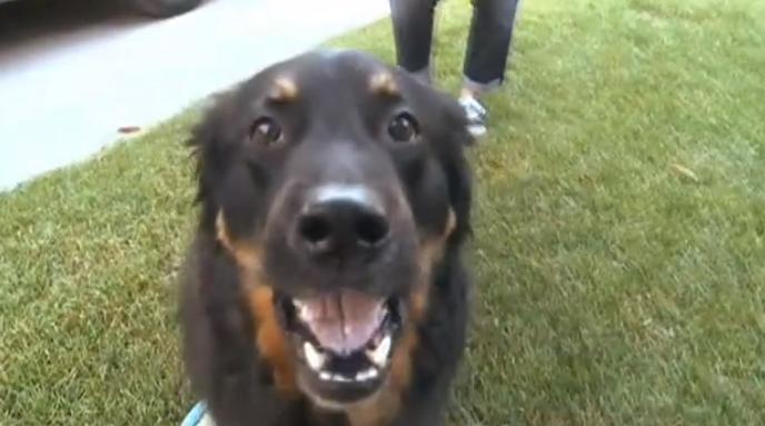 Tucker the dog (WAOW)