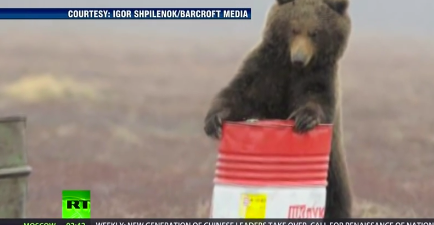 Did You Know Russian Bears Love To Get High On JetFuel?