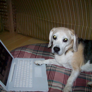 What Would Article Headlines Look Like If Dogs Ran The Internet?