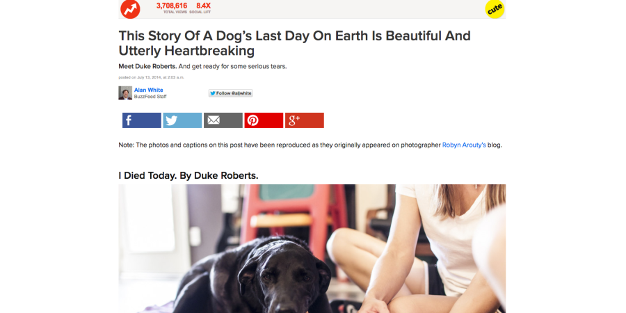 BuzzFeed Murdered A Dog ForPageviews
