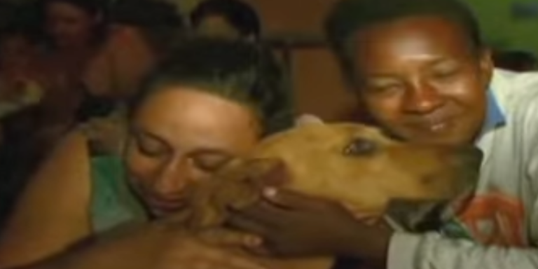 We Humans Barely Share Things With Each Other, But This Junkyard Dog Risks Her Life Every Night For Her Friends AndFamily