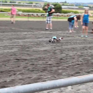 Here's What Happens When A Dachshund Named Anderson Pooper Runs The Wiener Dog Race