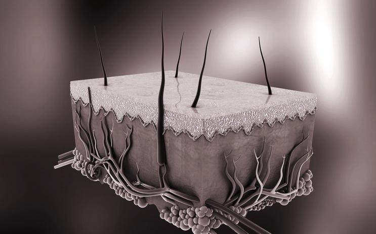A digital illustration of skin, Shutterstock