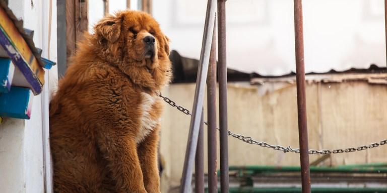 8 Dog Breeds Every Prospective Owner ShouldConsider