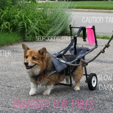 This Corgi Was Diagnosed With A Degenerative Muscle Disease, So His Family Did Something Amazing