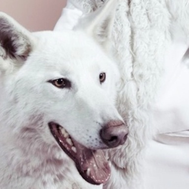 The Weird Trends You Didn't Know Are In: Dogs