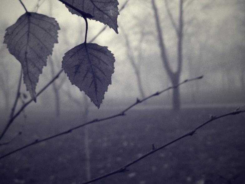 Dávid Sterbik / flickr.com