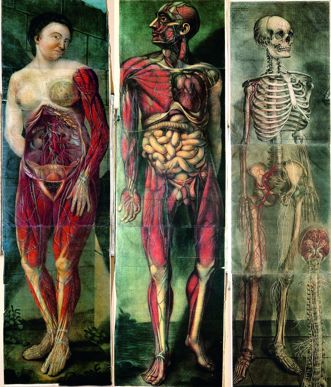 Three plates from the first full-colour anatomical atlas – Jacques Fabien Gautier d'Agoty's Myologie (1746-48). (via)
