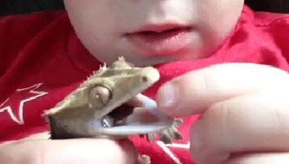 This Dragon Bit His Boy's Finger But They're StillFriends