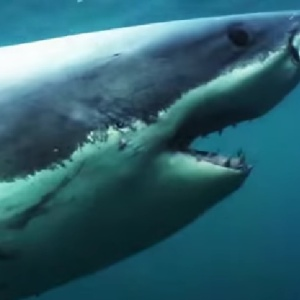 Shark Week Has Become Total Bullshit