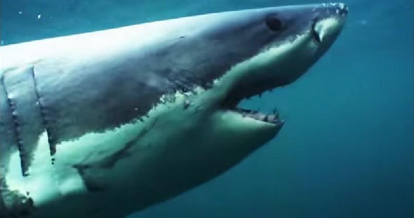 Shark Week Has Become TotalBullshit