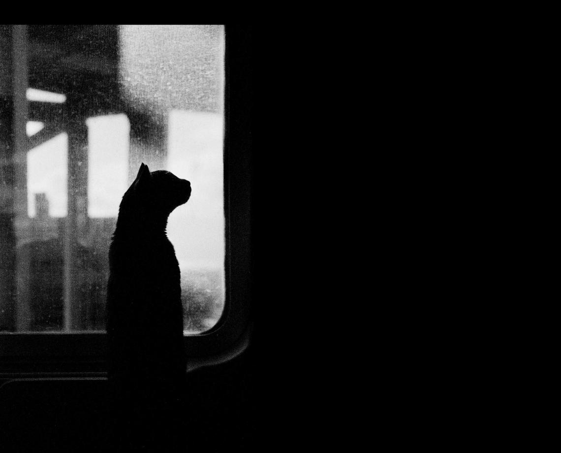 image - Flickr / Lorenzo Cuppini