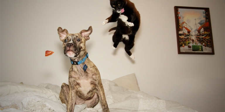 Are Cats Smarter Than Dogs, Or Are Dogs Smarter ThanCats?