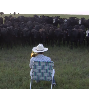 """This Farmer Playing """"Royals"""" On The Trombone For His Cows Will Bring A Smile To Your Face"""