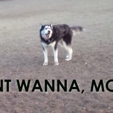 This Cute (But Bratty) Husky Doesn't Want To Leave The Dog Park