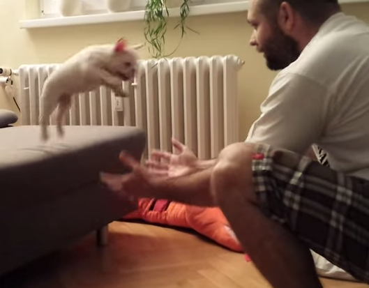 Watch: Literally Die Watching This French Bulldog Puppy Jump Into Its Owner'sArms