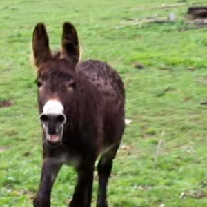 3 Lessons About Human Relationships Learned From Donkeys