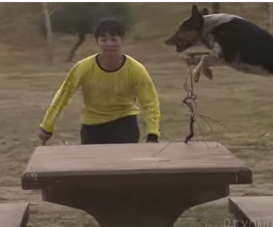 Watch: Can This Dog Do Parkour?
