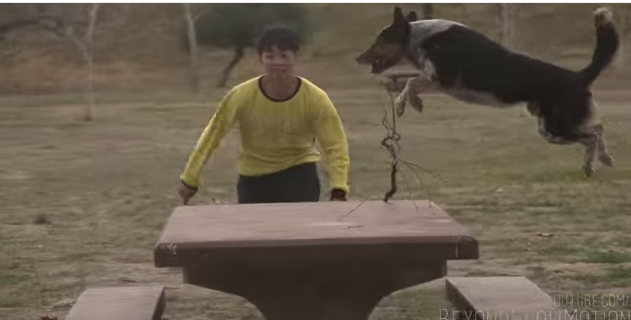 Watch: Can This Dog DoParkour?