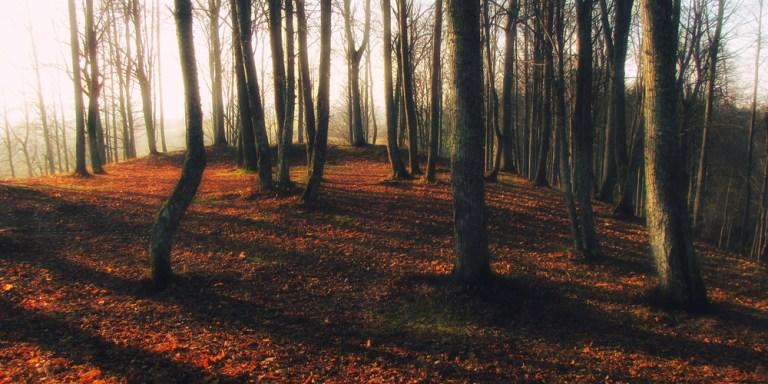 Autumn Is The Fiona Apple OfSeasons