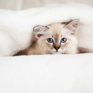 12 Things You Need To Know About Dating A Cat Owner