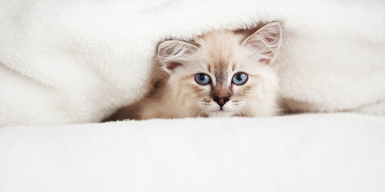 12 Things You Need To Know About Dating A CatOwner