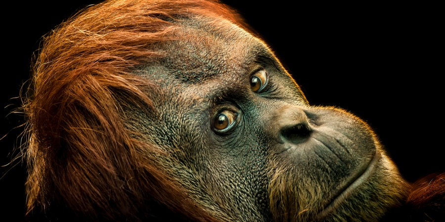 8 Reasons Why We Need To Stop Worrying About EndangeredSpecies