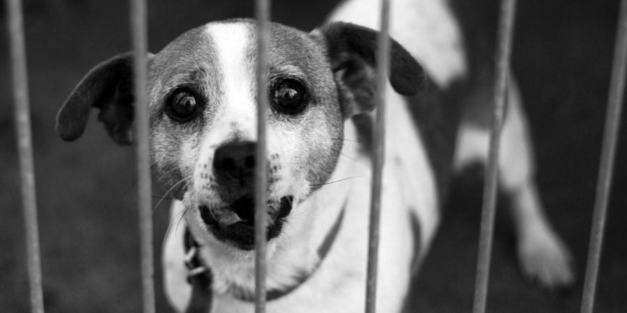 10 Reasons To Adopt A ShelterDog