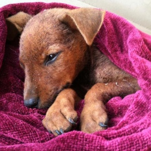 Someone Abandoned This Puppy And Left Him For Dead Until A Kind-Hearted Stranger Saved His Life