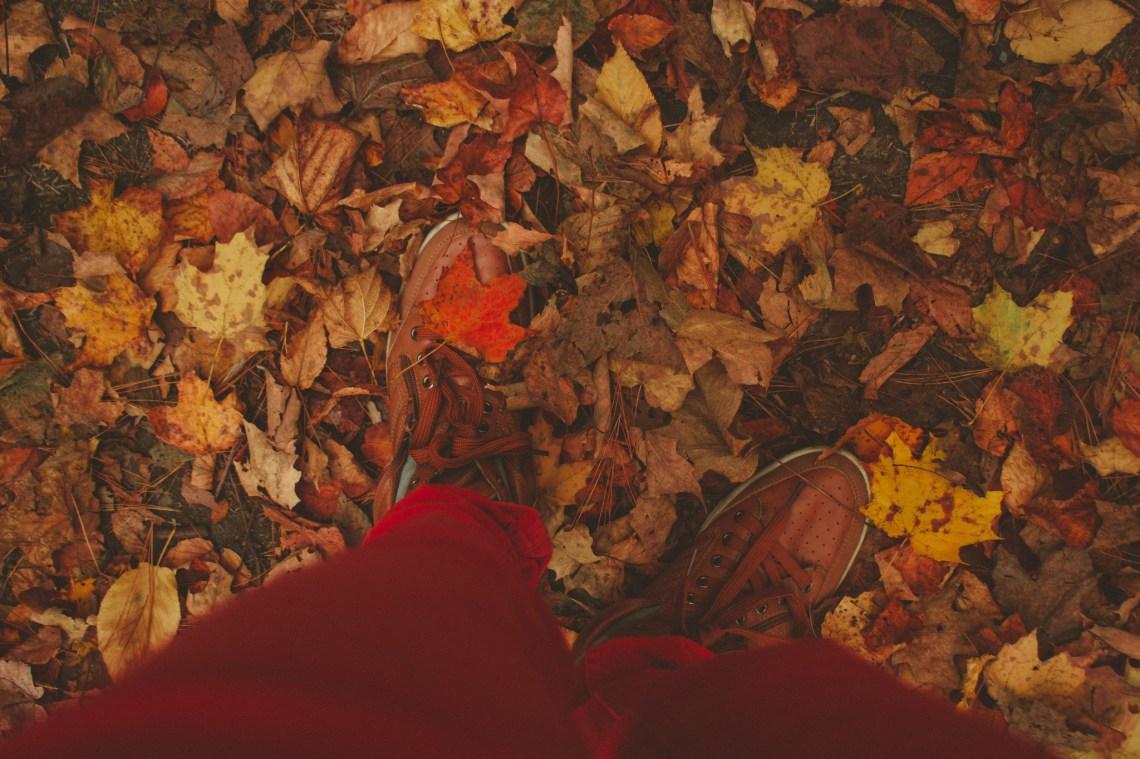 image - Flickr / Lulu Lovering