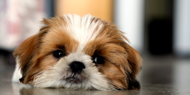 22 Pet Owners On The One Thing That Lets You Know You're Ready For APet