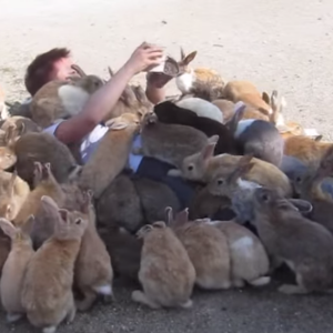 You Have To Watch These Bunnies Crawl All Over This Guy For Some Food