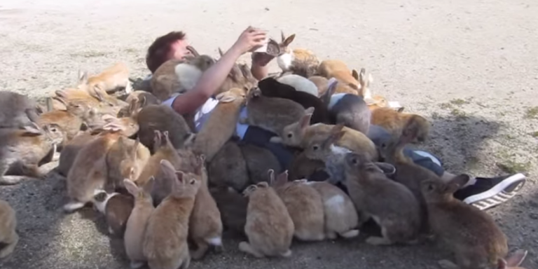 You Have To Watch These Bunnies Crawl All Over This Guy For SomeFood