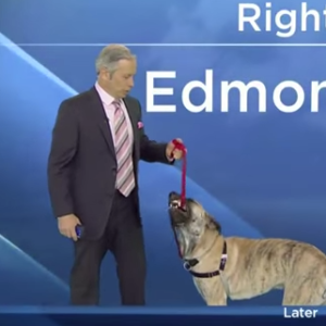 Watch How This Adorable Dog Interrupts A Live Weather Forecast